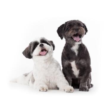 Sens-i-lavi Sensilavi profesjonalny szampon dla psów