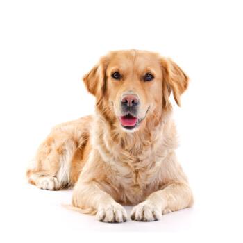 Sens-i-lavi Sensilavi uniwersalny szampon dla psów